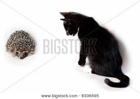 Kitten And Hedgehog.