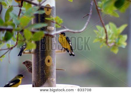 Birds At Feeder Three