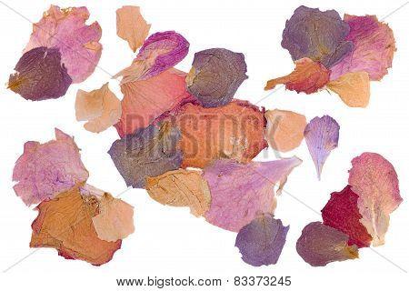 Dried Flower Rose Petals