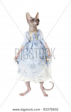 Don Sphinx Cat Dressed As A Doll