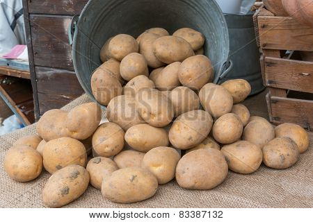 Brown Potatoes Rolling Out Of An Old Iron Bucket Over Jute Textile