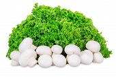 stock photo of crimini mushroom  - Leaves of lettuce and mushrooms on a white background - JPG