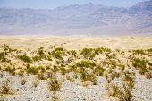 picture of mesquite  - Sand Dunes of Mesquite Flats desert Death Valley California - JPG