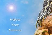 image of craw  - metaphor of Follow Your Own Dreams with leg of turtle - JPG