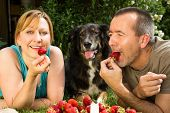 picture of eat grass  - A man and a woman lying with her dog on the grass and eating strawberries - JPG