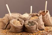 picture of sunflower-seeds  - Row healthy grain food  - JPG