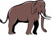 stock photo of indian elephant  - Illustration of an Indian elephant with tusks walking viewed from side on isolated white background done in cartoon style - JPG