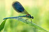 image of spread wings  - the beautiful dragonfly on a meadow closeup - JPG