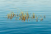 image of marsh grass  - Forest Lake with reflections and blade of grass - JPG