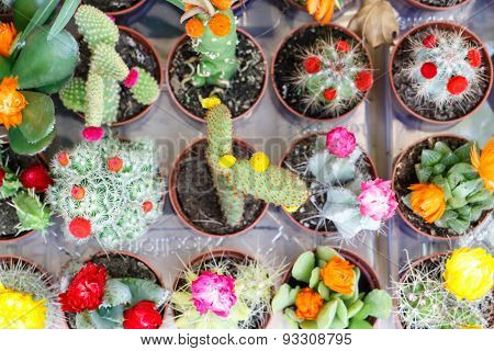 Small Cactus Plant Group