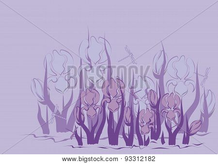 Lilac Background With Iris