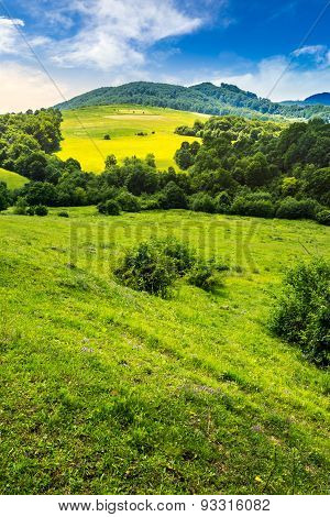 Agricultural Field On Hillside Meadow