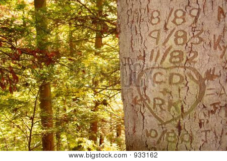 Love Carved In A Tree