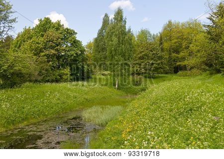 overgrown forest pond