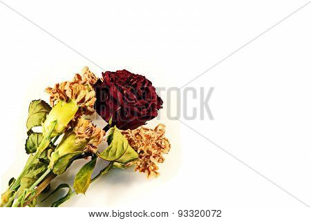 Dry roses and Flowers in White Background