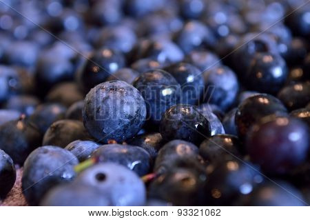 Closeup Of Wet Blueberries