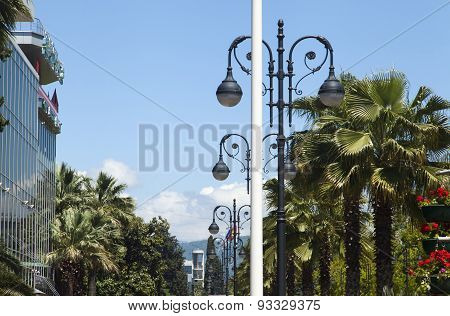 Palm Trees On The Street