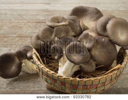 Mushroom Bhutan