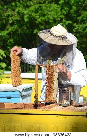 Experienced senior apiarist cutting out piece of larva honeycomb in apiary in the springtime
