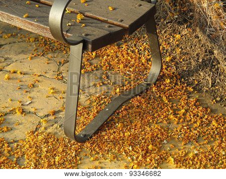 Bench And Blossoms