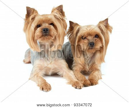 Two Haircut Dogs