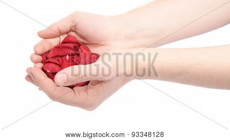 Hands holding a pile of rose petals