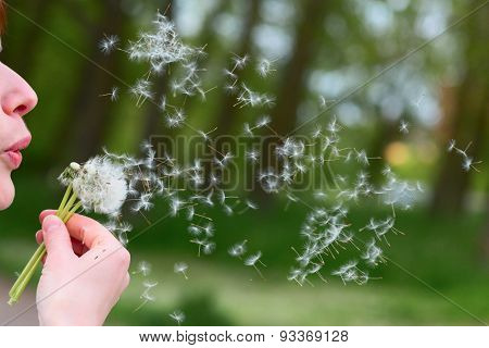 Woman is blowing the fluff of a dandelion