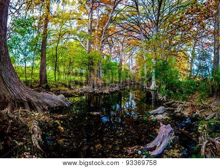Panoramic View Of Morning Sunlight On Fall Foliage At Cibolo Creek in Texas.
