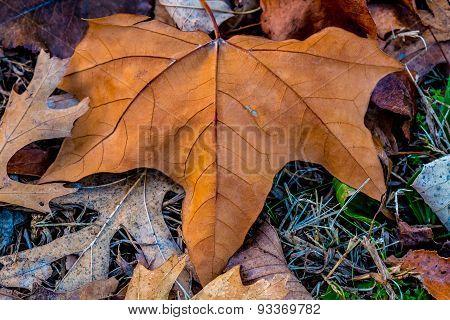 Closeup Of Beautiful Intricate Fall Foliage.