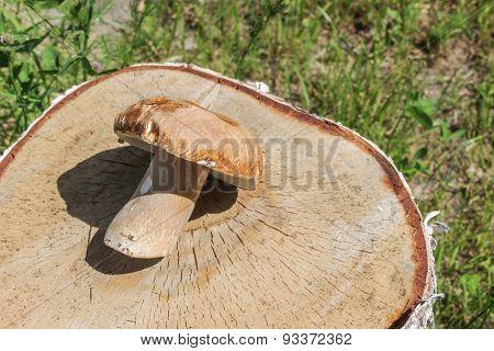 Mushroom on a stub
