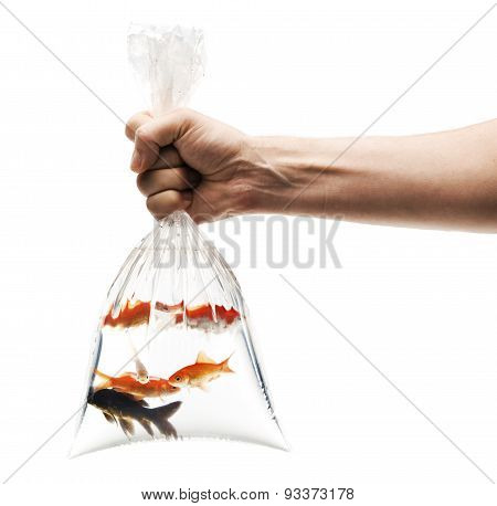 hand holding plastic bag with goldfishes