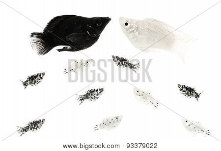 black and white animal couple with spotted black and white offspring