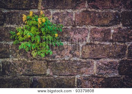 Flower on a brickwall