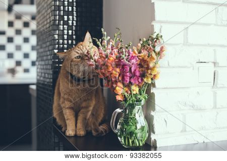 red cat smelling the flowers