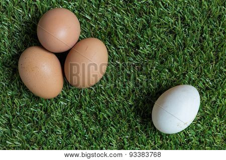 Minority Concept : One White Egg Is Isolated From A Group Of Brown Eggs.