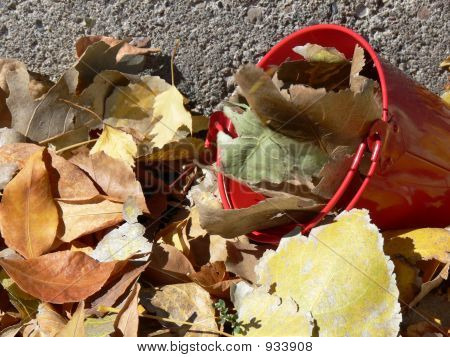 Leaves And Bucket