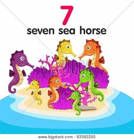 Illustrator of seven sea horse
