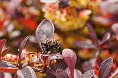 Постер, плакат: Macro Of Fly On Red Bush