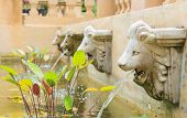 pic of debonair  - The lion spray decorate or design gardens. ** Note: Shallow depth of field - JPG