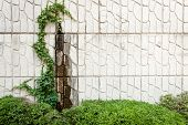 stock photo of ivy  - A blank somewhat weathered brickface stucco wall with some ivy and bushes - JPG