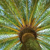 foto of palm  - Tropical tree - JPG