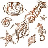 picture of seahorse  - Hand drawn sea life set - JPG