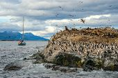 foto of sea lion  - King Cormorant colony sits on an Island in the Beagle Channel - JPG