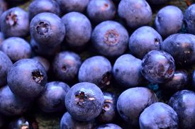 picture of piles  - Fresh certified organic blueberries in large pile together - JPG