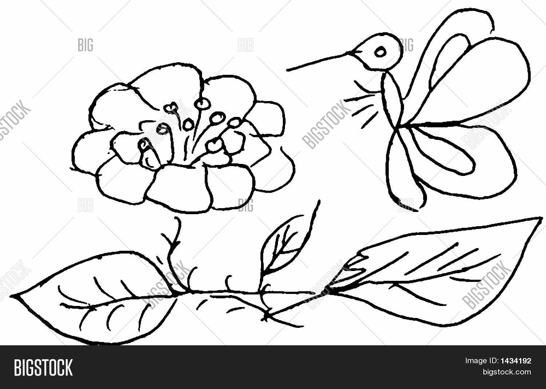 butterfly flower drawing image u0026 photo bigstock