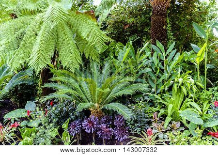 Tropical plants in a Botanical Garden London UK with a tree fern palm and assorted shrubs