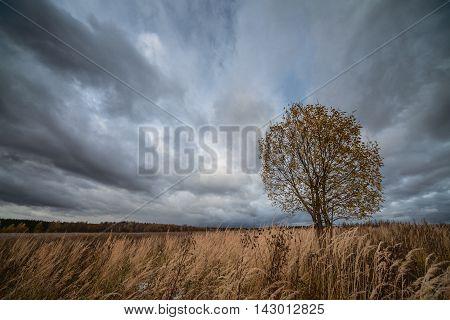 Lonely tree in field under gloomy sky