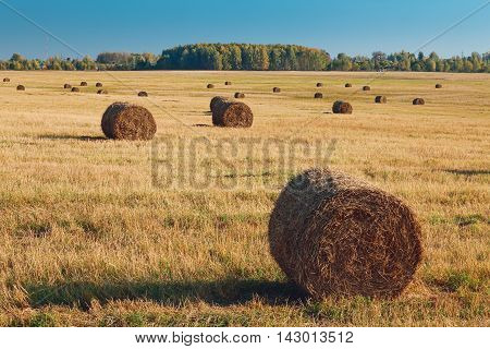 Rural landscape with hay bales after harvest