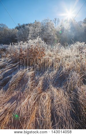 Winter sunny day, nature covered with frost on sunlight