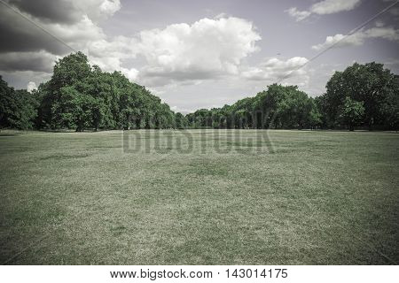 Muted green field of grass and trees nature background with copy space in bottom and top sections.